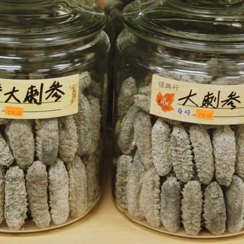 TB-sea-cucumber